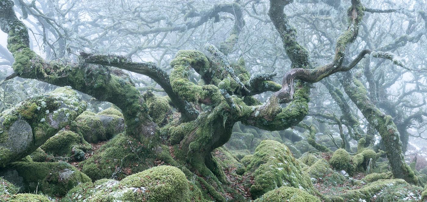 atmosphere burnell dark fine-art forest mist mystical wistmans wood woodland