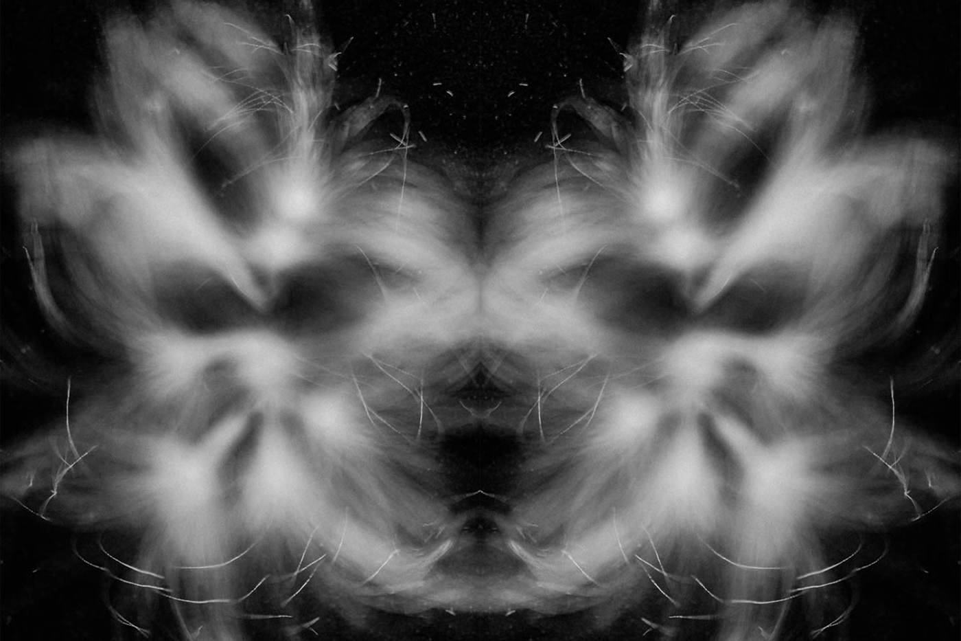 Black and white dandelion seed photograph.