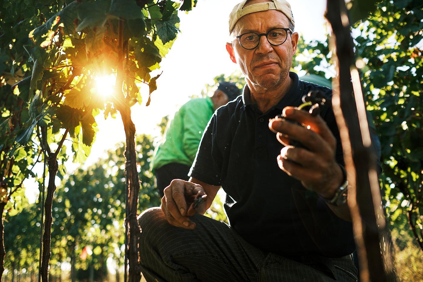 Esslingen Fotoreportage reportage Spätburgunder wein weinlese wine fotografie Photography