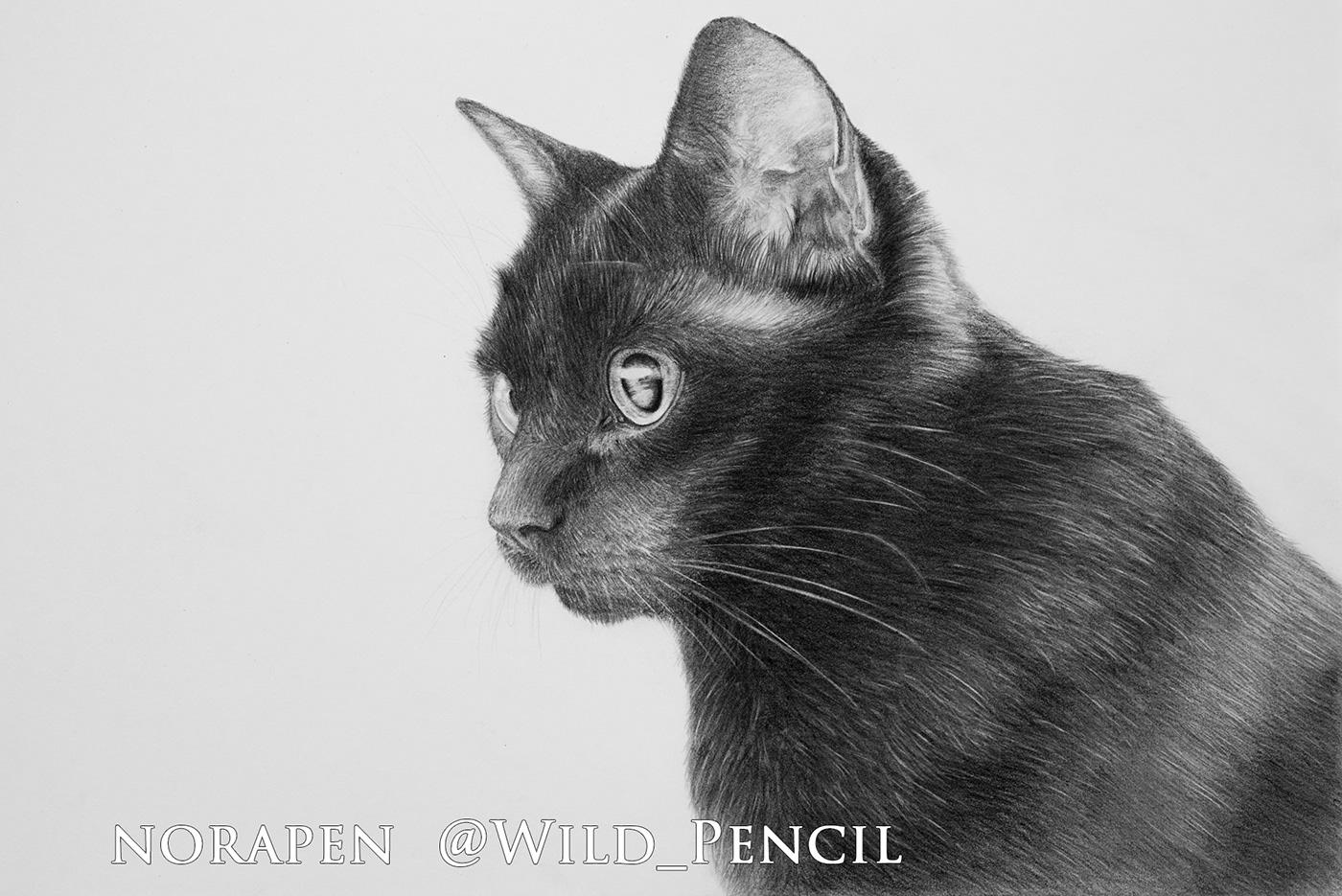 Black Cat Pencil Drawing