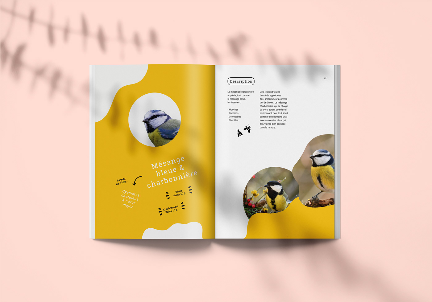 edition graphisme graphicdesign paper birds oiseaux livre book colors ILLUSTRATION