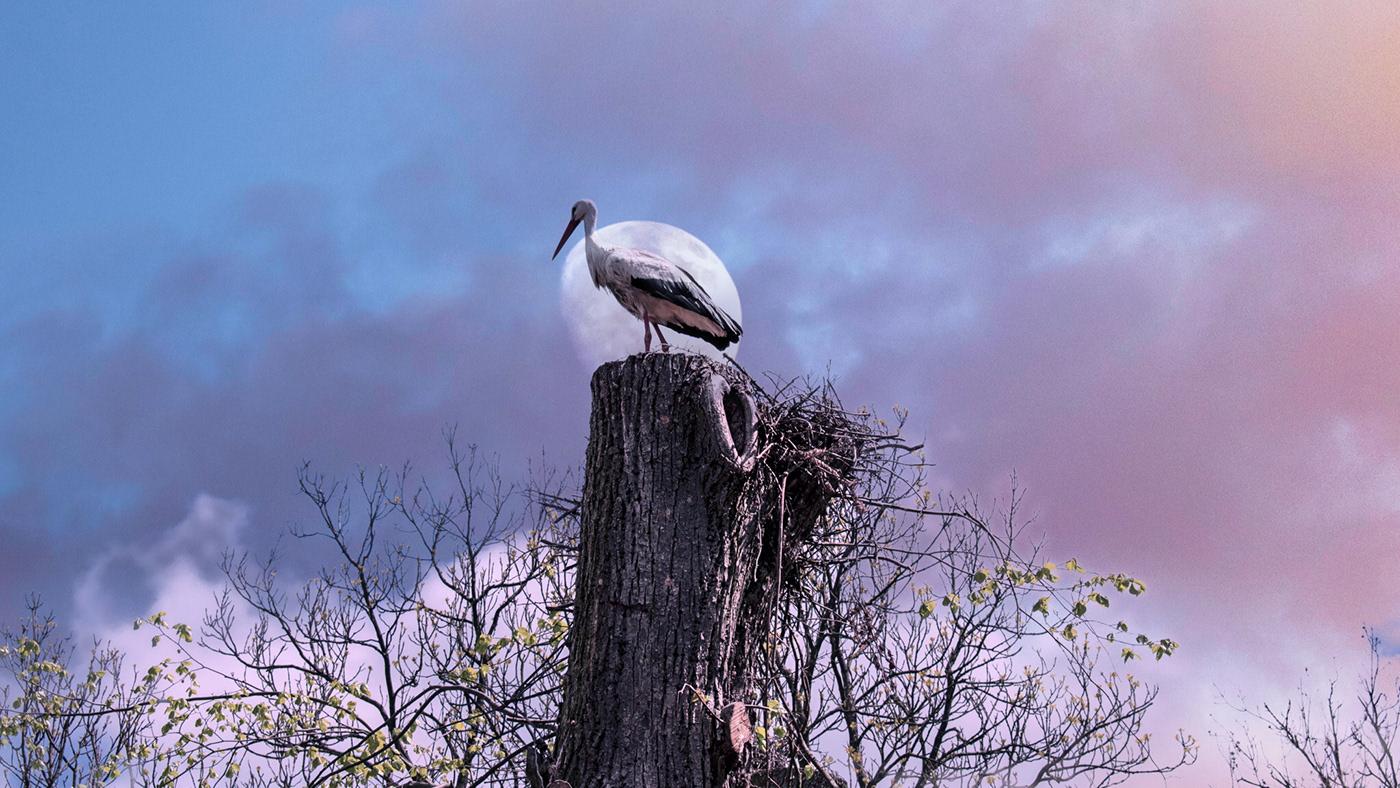 animal Edited moon stork
