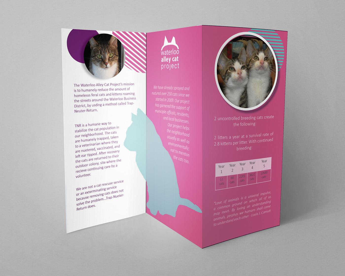 Tri-fold Brochure Project on Behance