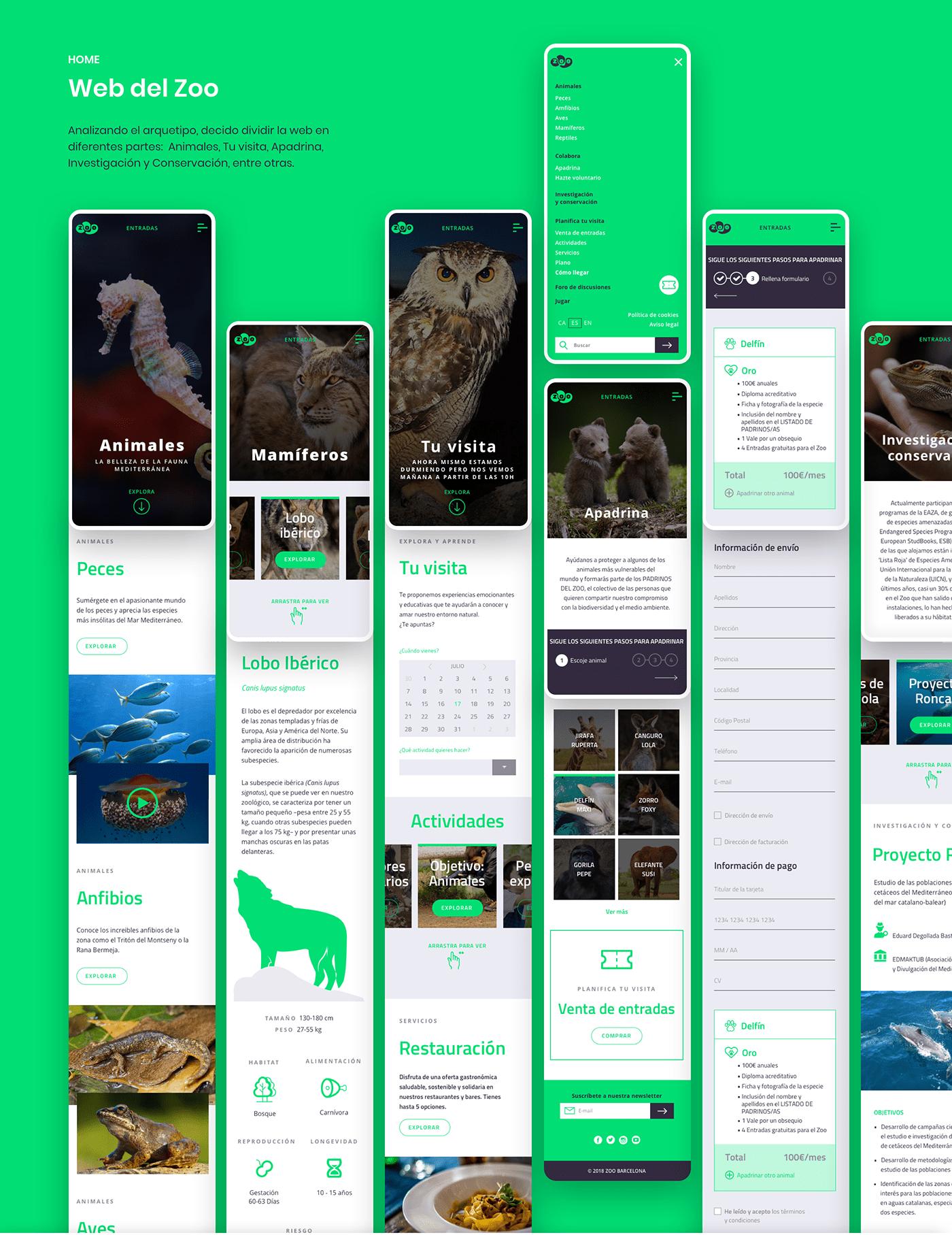 Interaction design  Responsive sketch ui design user experience UX design Web Design  wireframing zoo barcelona zoo xxi