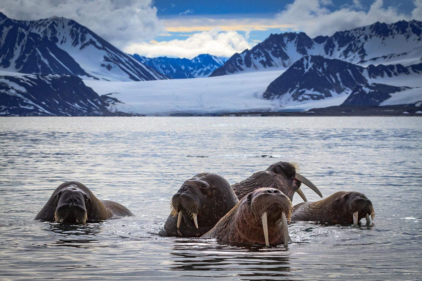 polar regions Arctic antarctic antarctica Svalbard wilderness Landscape wildlife