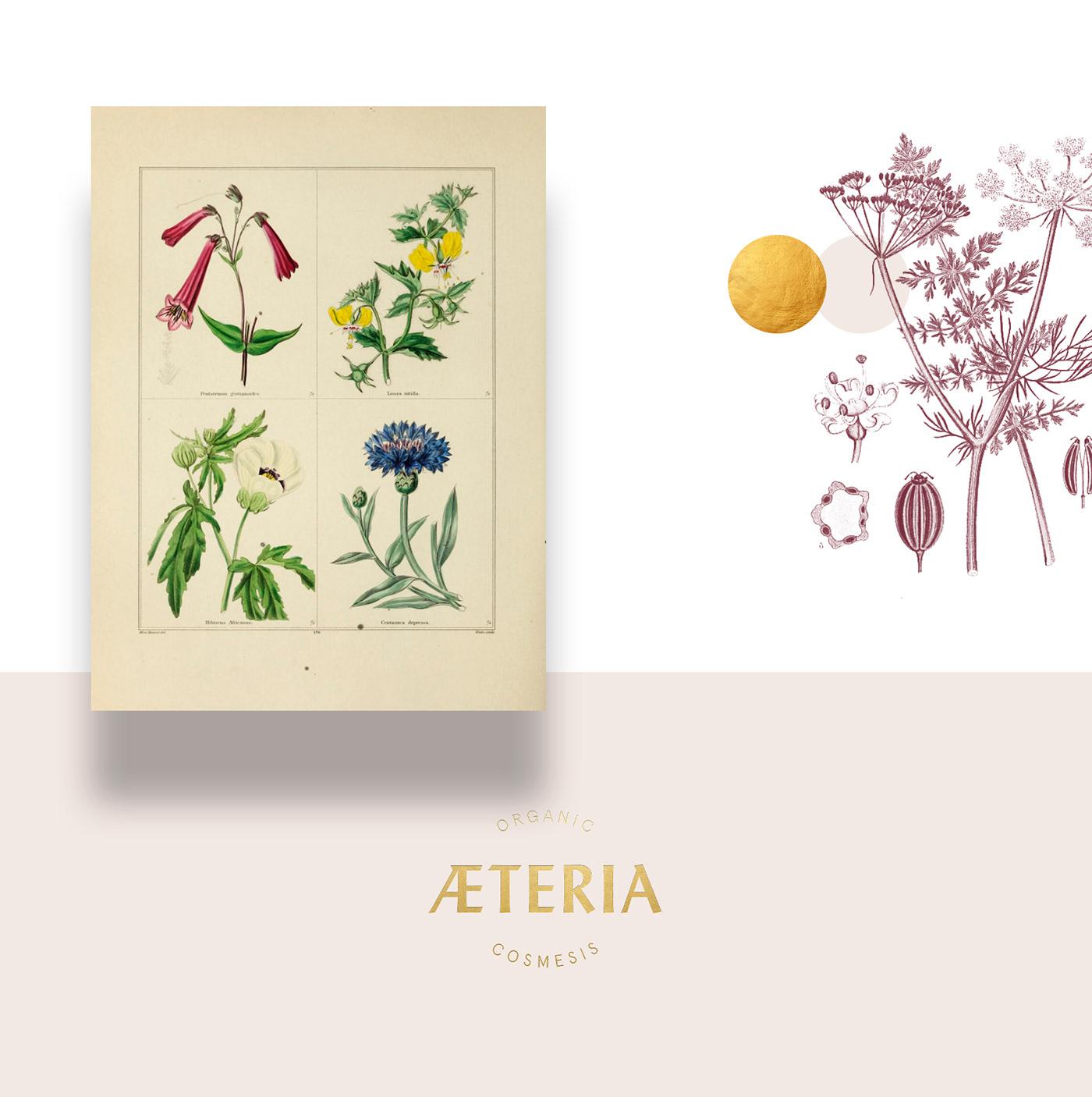 Packaging essential oils organic Cosmetic branding  Aeteria natural Nature Bergamot almond