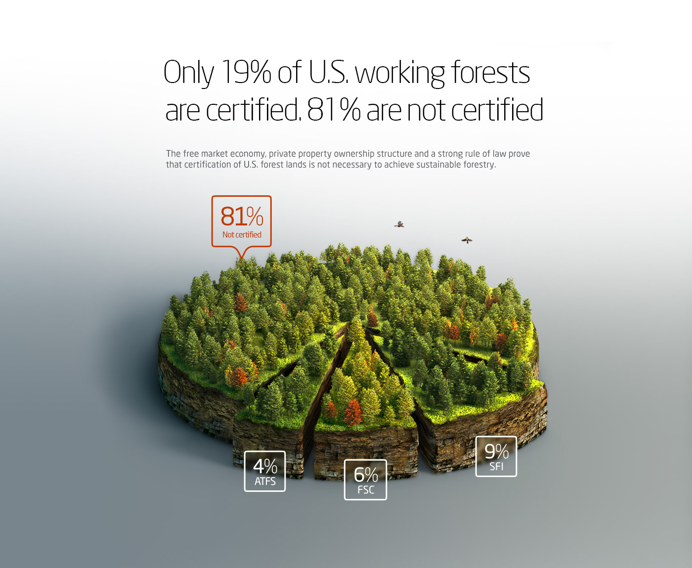 Tree  infographics pie chart map diagram forestry aerial view annual report information design data visualization information graphics graph plot Ecology Nature pine