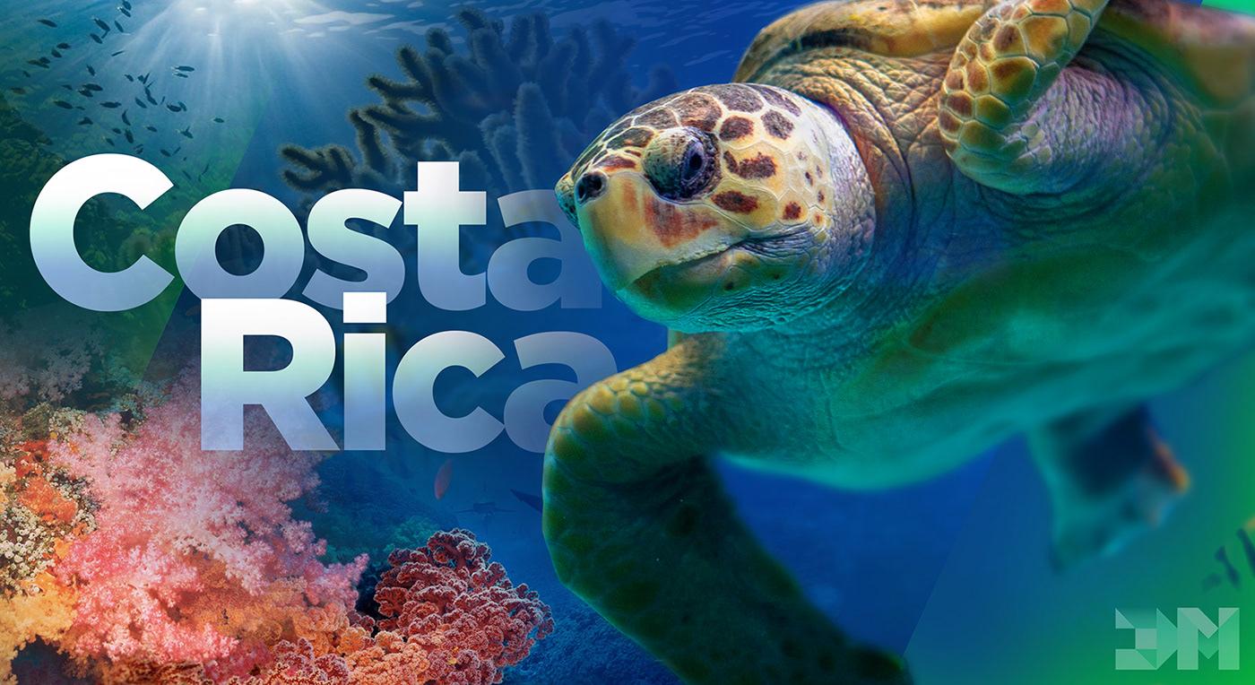 coral reef Costa Rica Ocean sea Turtle
