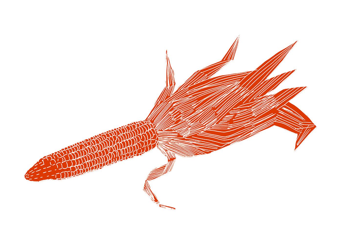 Image may contain: animal, fish and arthropod