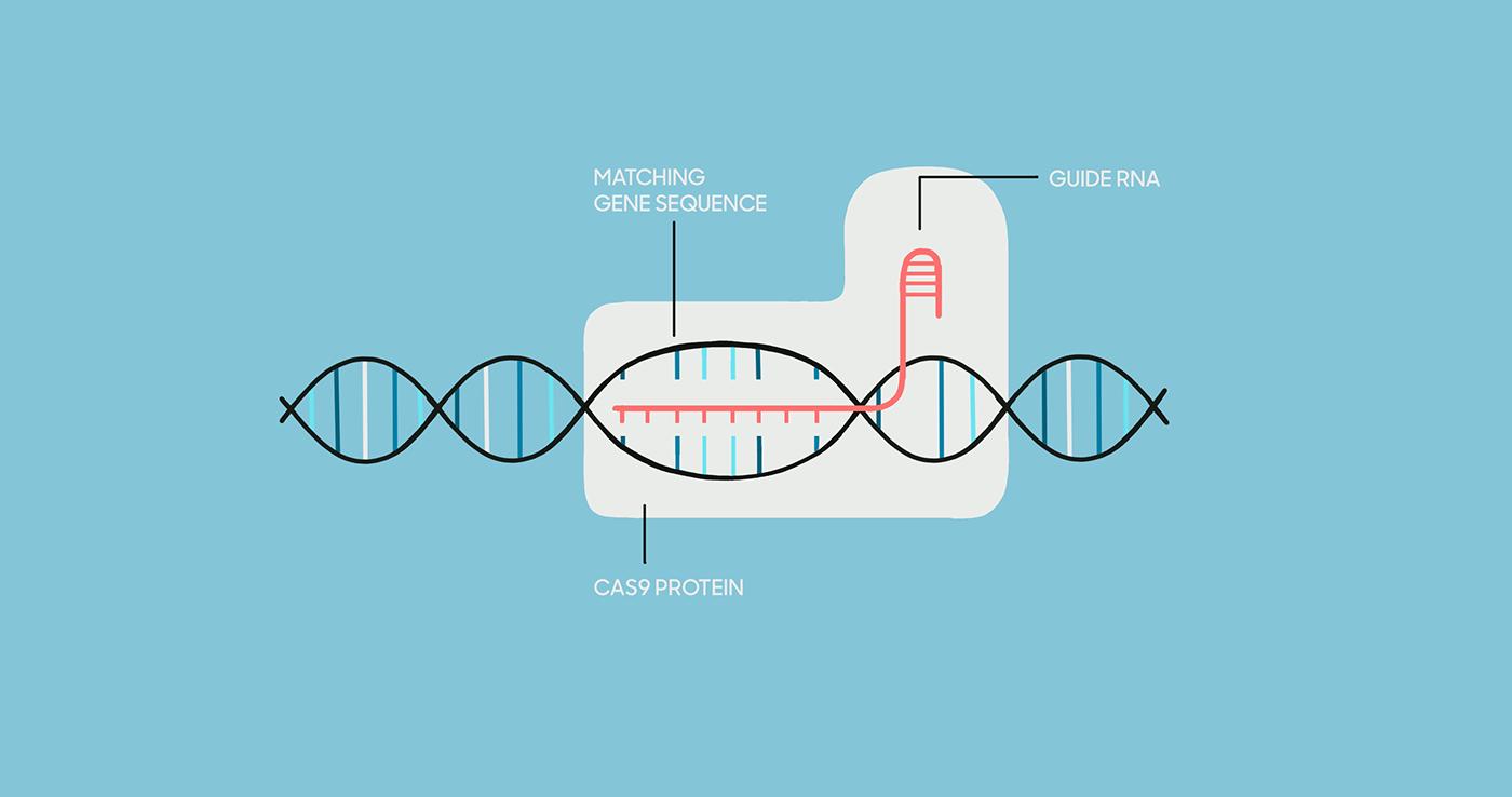 UCSF - CRISPR - Directors Cut