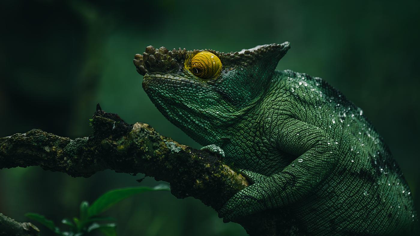 Wildlife of Madagascar. on Behance