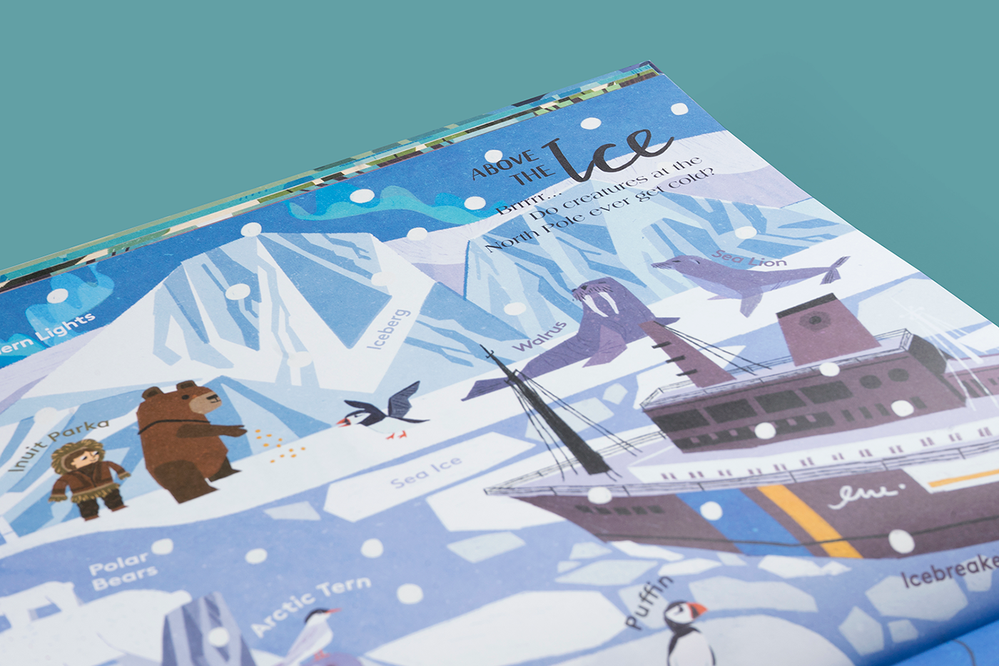 childrens book Picture book explore Travel kids bear vocabulary digital illustration