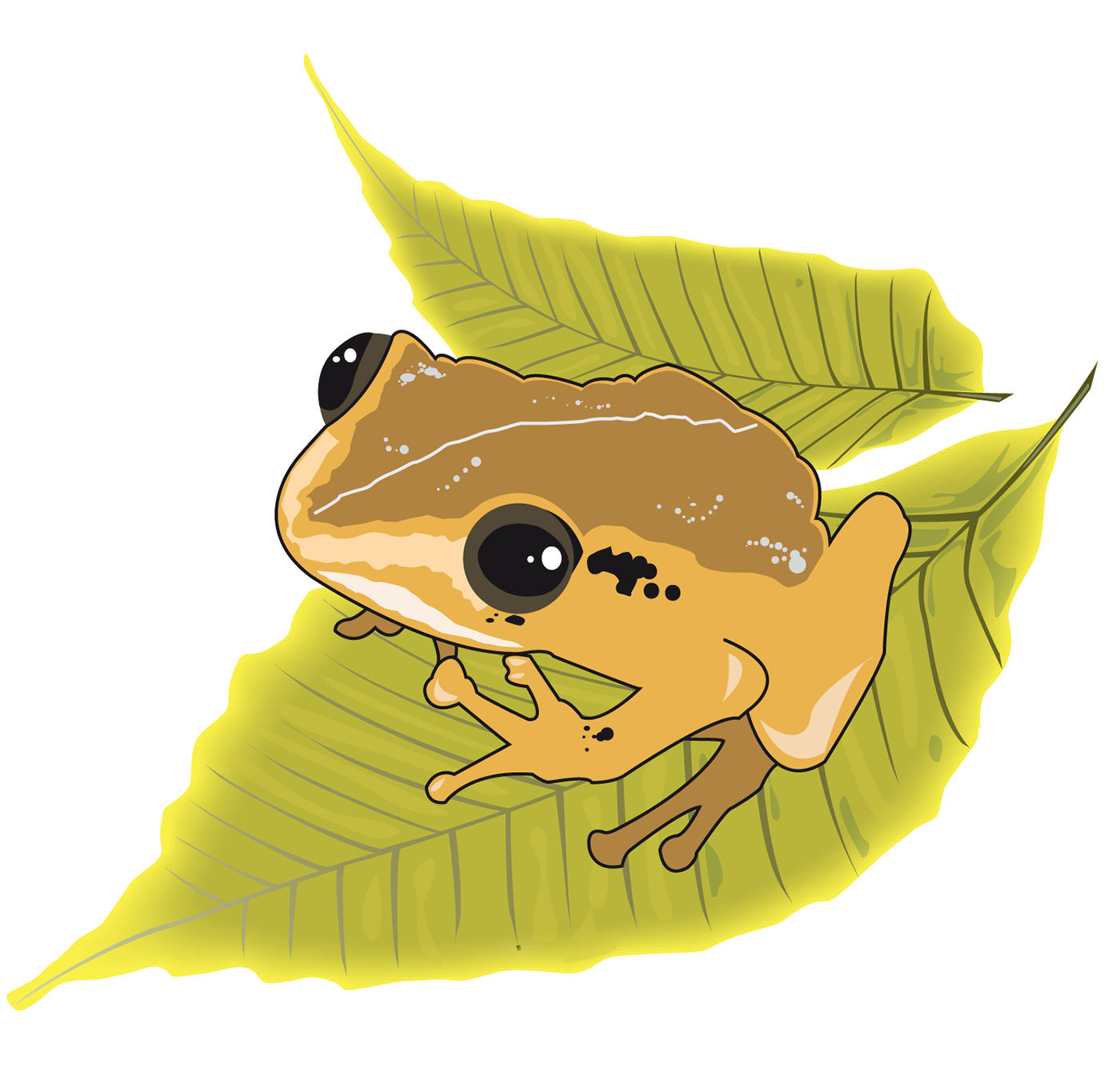 "Puerto Rican Native Frog ""Coqui"" On Behance"