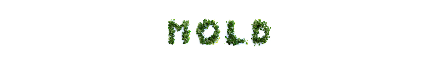 stop motion animation  Typeface typography   Food  Photography  concept medium