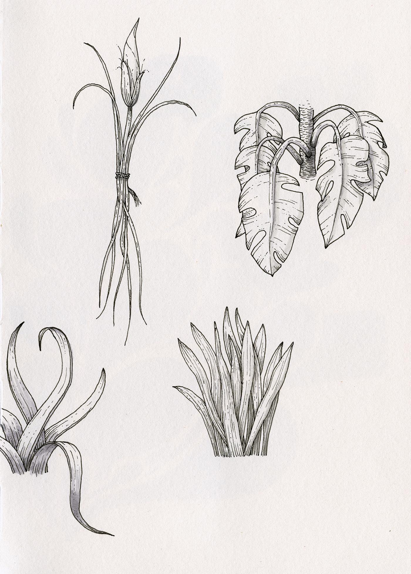 black & white,bw,Drawing ,ILLUSTRATION ,ink,plants