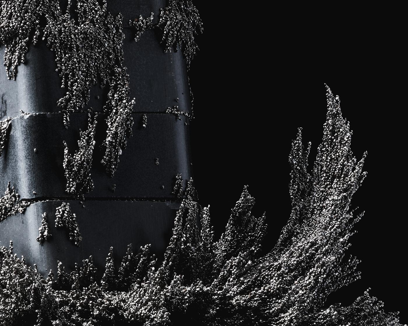 Image may contain: tree