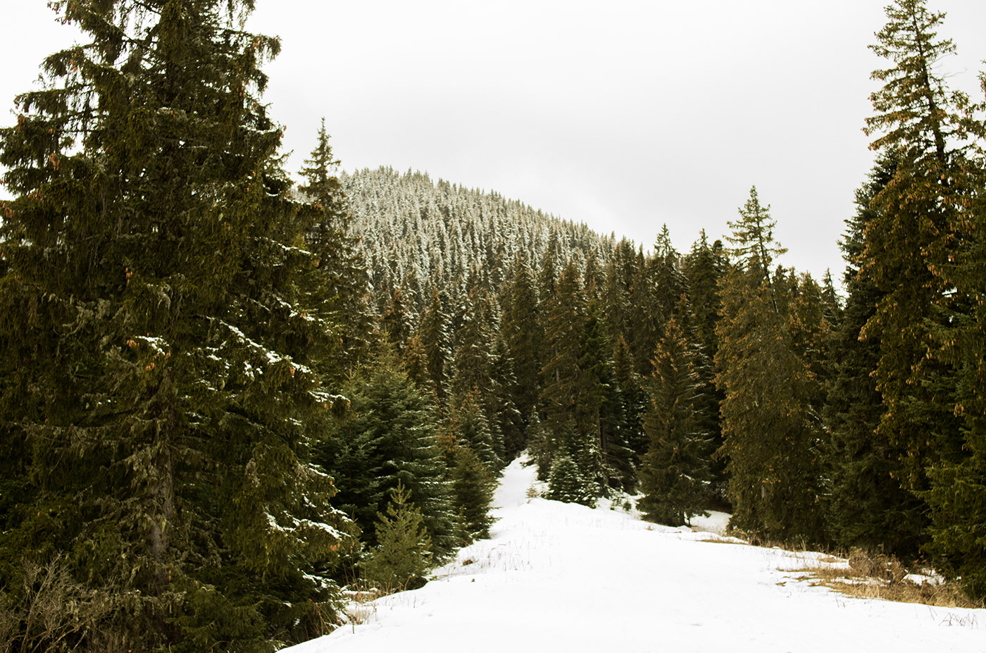 Wooded trails and snowy hills.