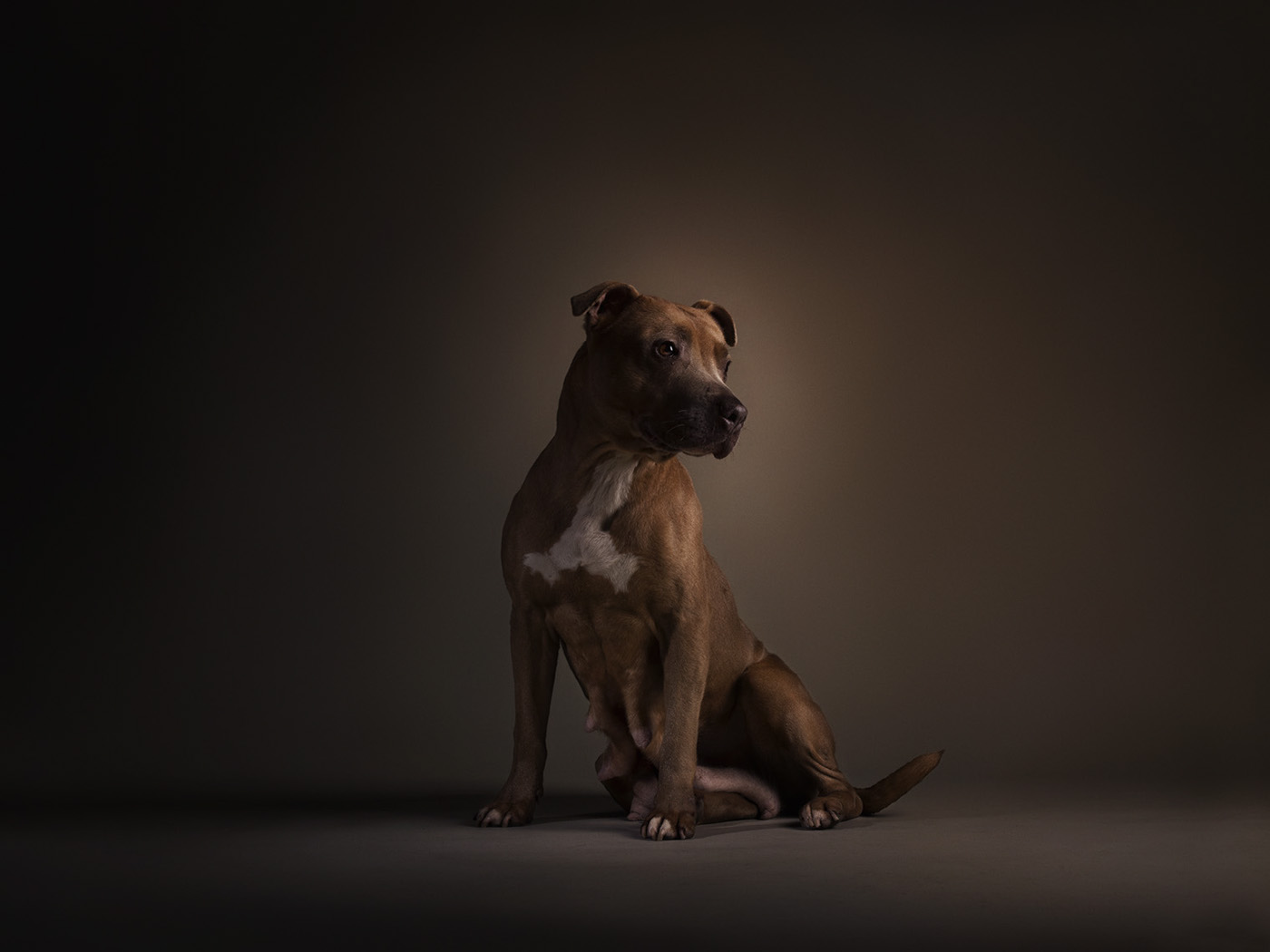 battersea dogs and,cats home,Renascence,rembrandt,portraits,dogs,animals,studio