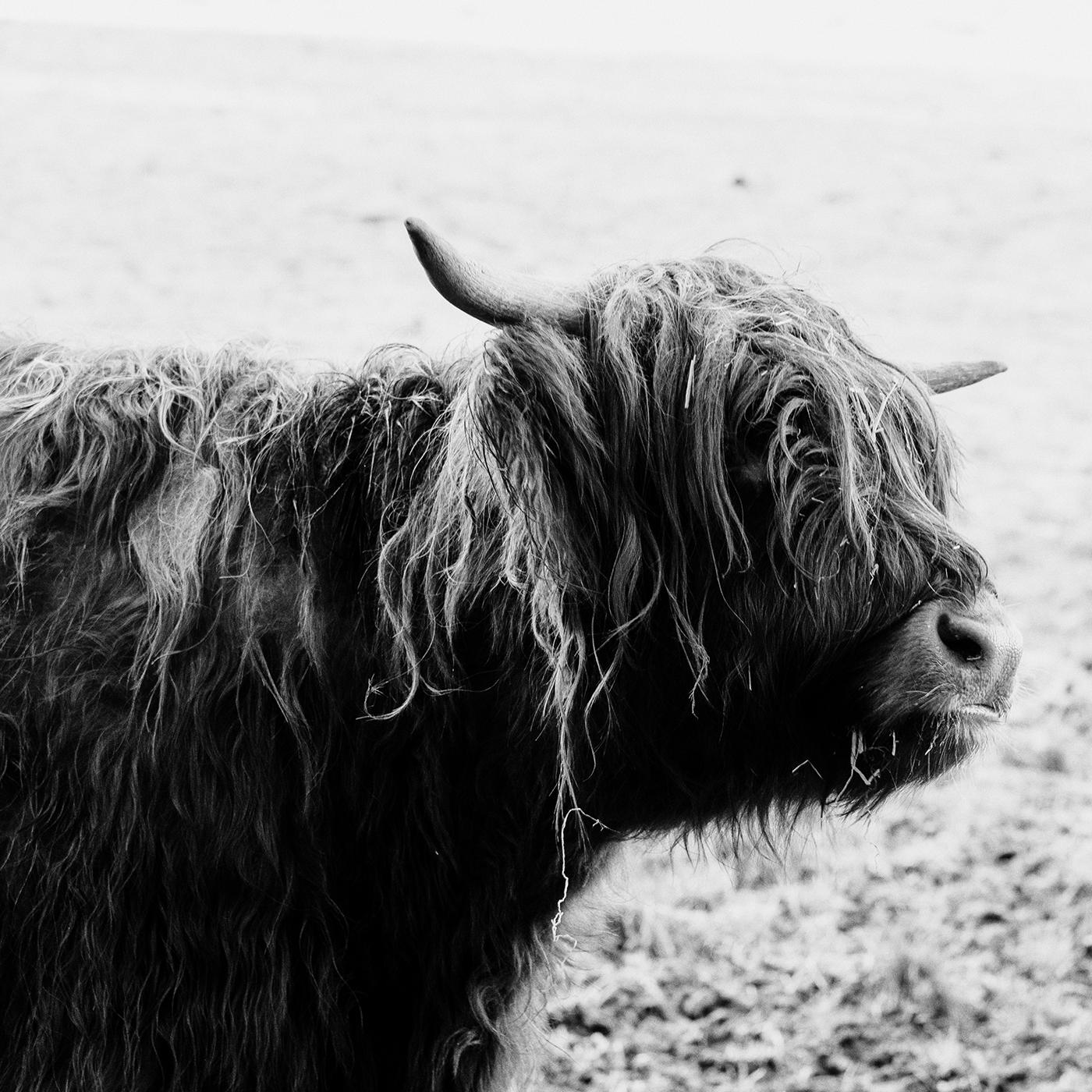 blackandwhite lowkey ox