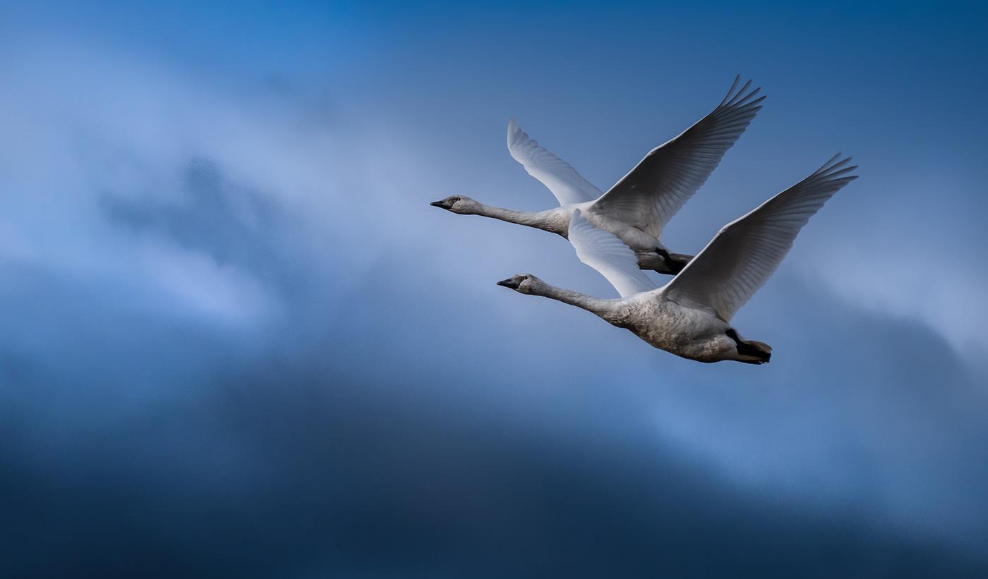 Image may contain: bird, animal and sky