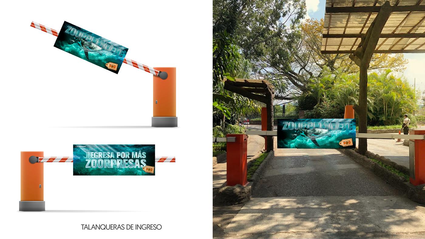 zoo campaign Guatemala Estudio Montenegro Zoológico La Aurora Zoorpréndete Digital Retouch pinguino penguin
