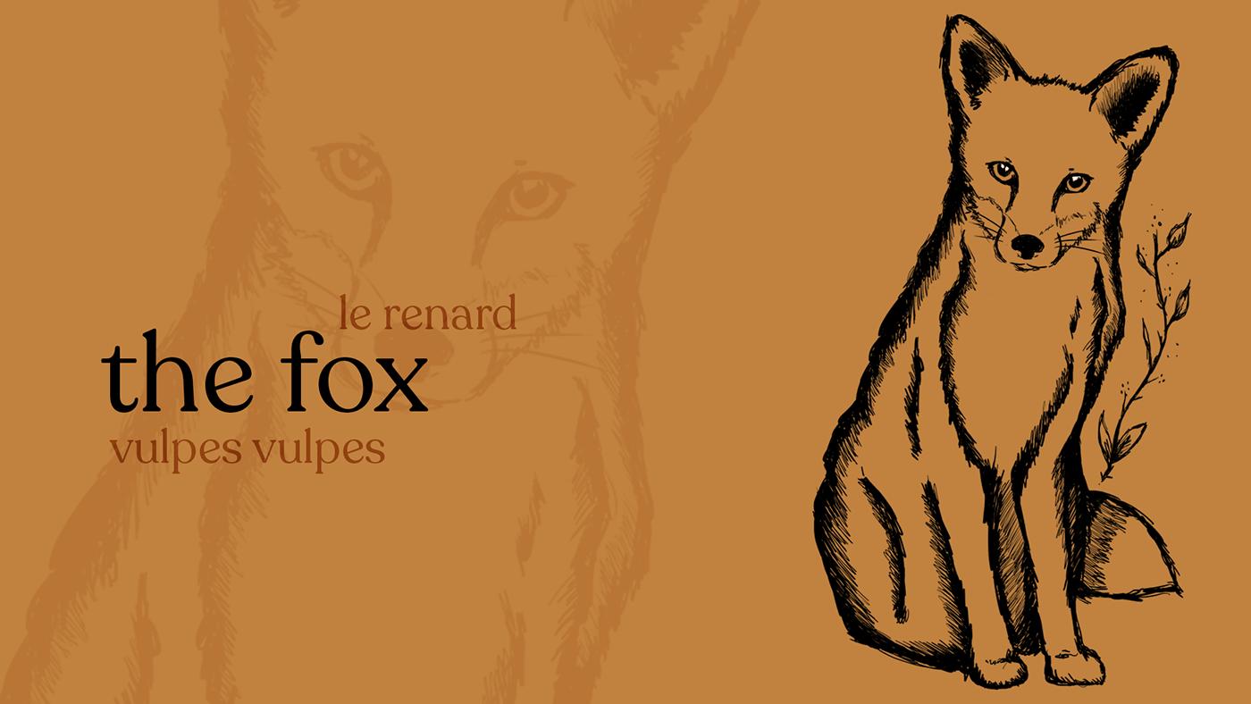 Fox illustration on orange background