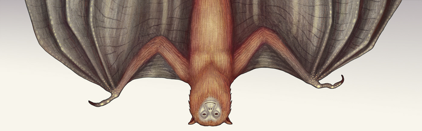 cryptids cryptozoology Kickstarter Picture book Bigfoot nessie yeti book crowdfunded funded