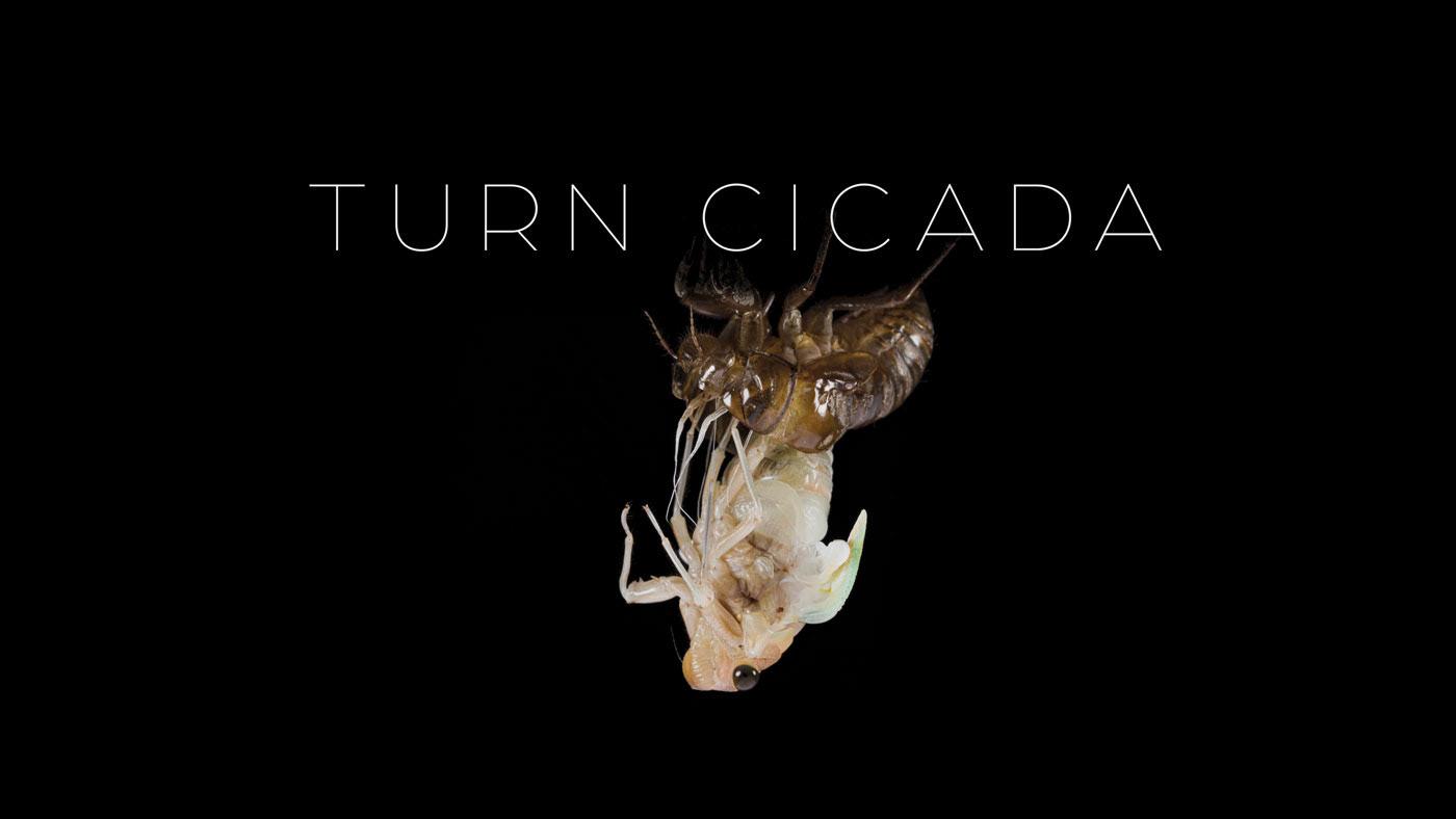 cicada セミ 孵化 羽化 Time Lapse タイムラプス