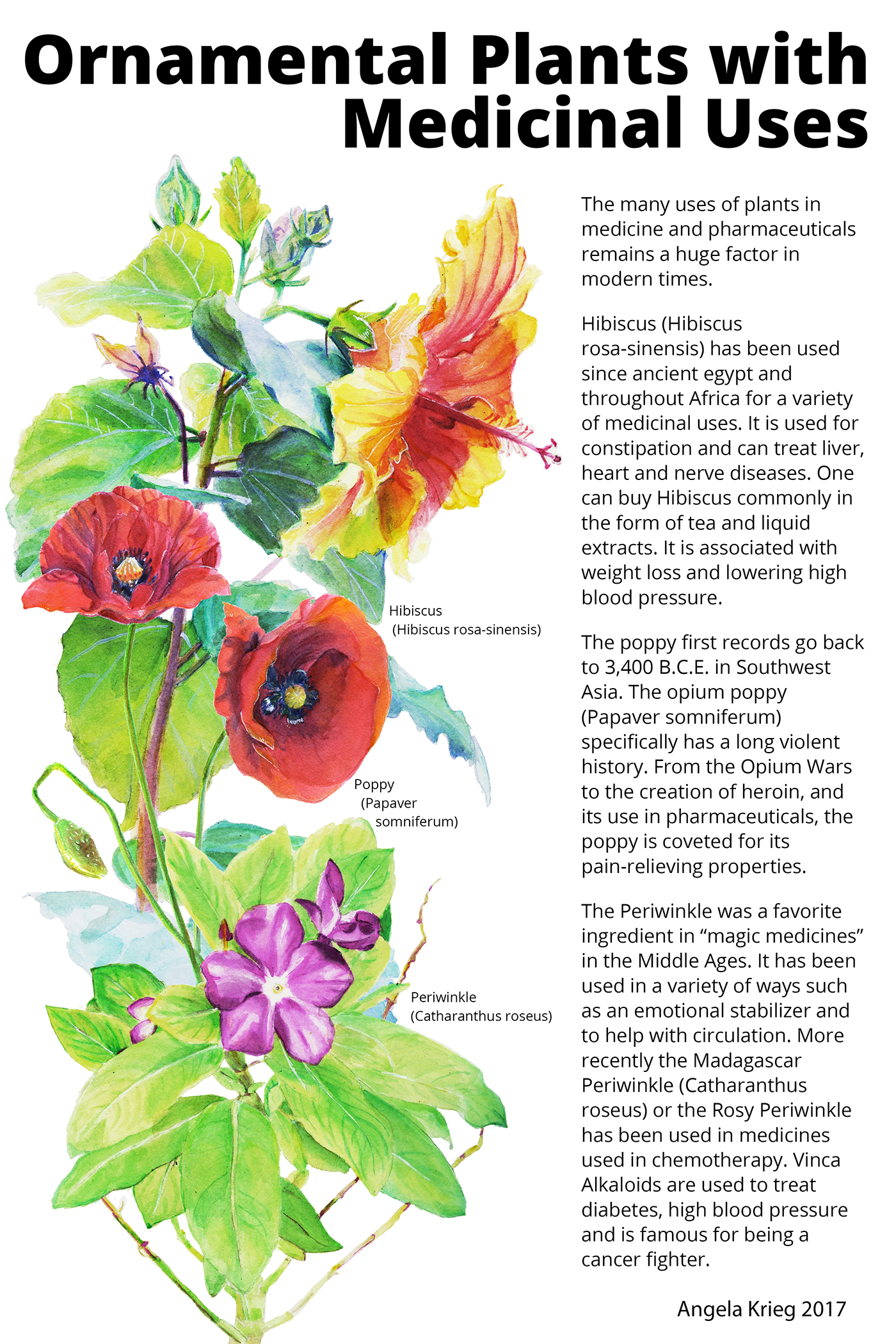 Ornamental plants and their medicinal uses on behance 10 x 15 hibiscus izmirmasajfo