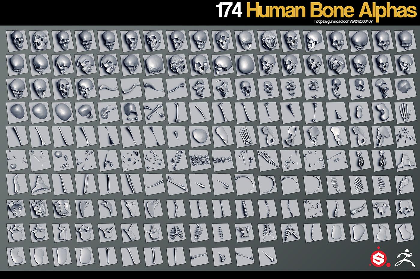 174 Human Bone Alphas on Behance