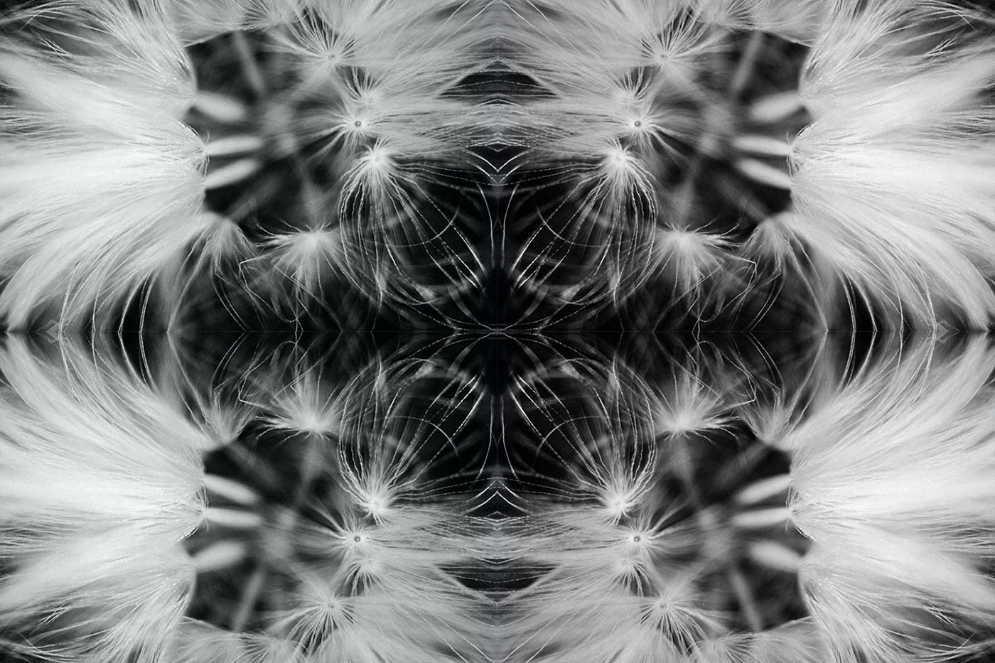 Kaleidoscope art experimentation using dandelion seeds. Black and white photography.
