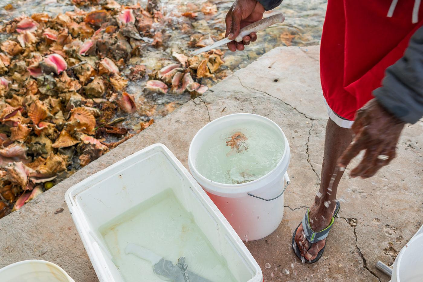 fishing Bahams overfishing conch salad price Ecology Photography  Documentary