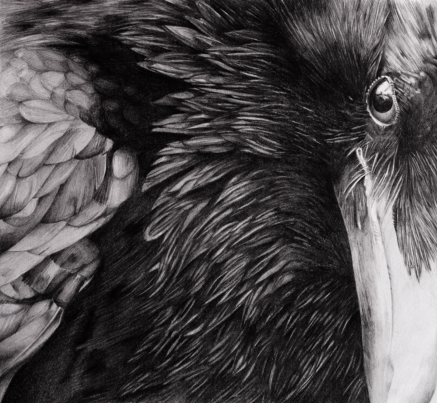 Pencil Drawing On Behance