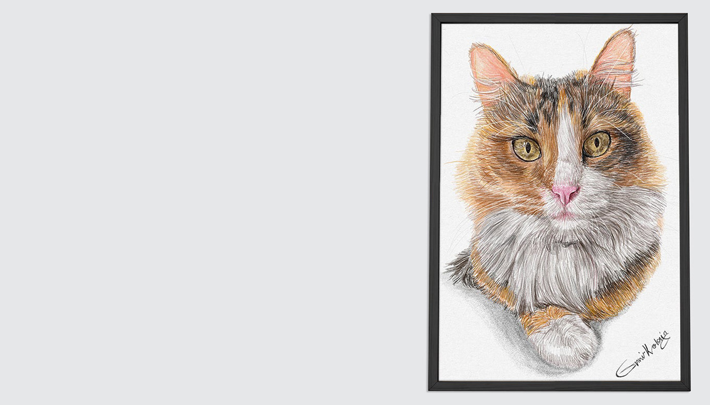 cats color drawing custom cat portrait custom dog portrait custom pet portrait Drawing  Pencil drawing