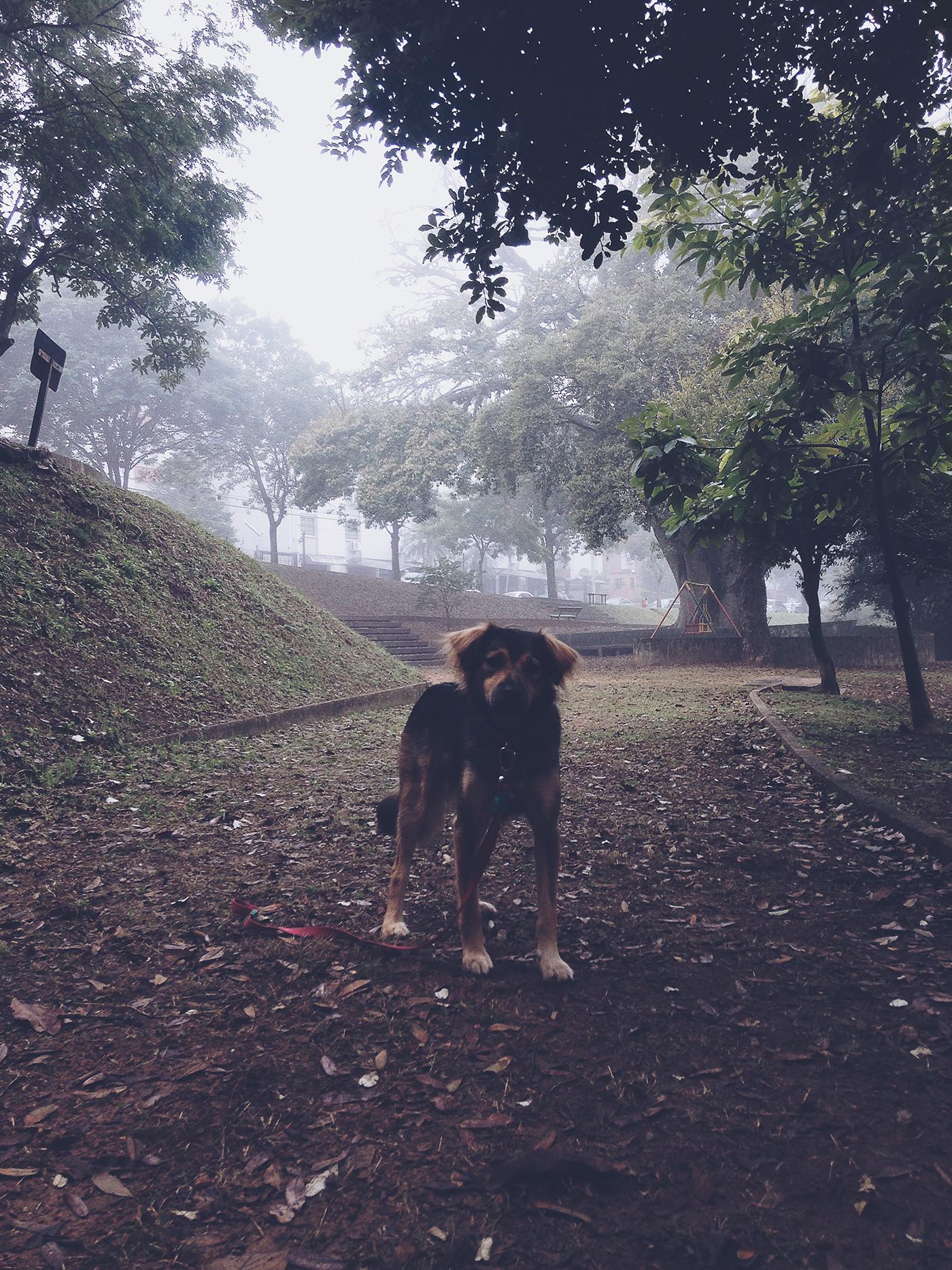 pet photography iphonegraphy pets dogs Mutts fotografia de estimação cachorro