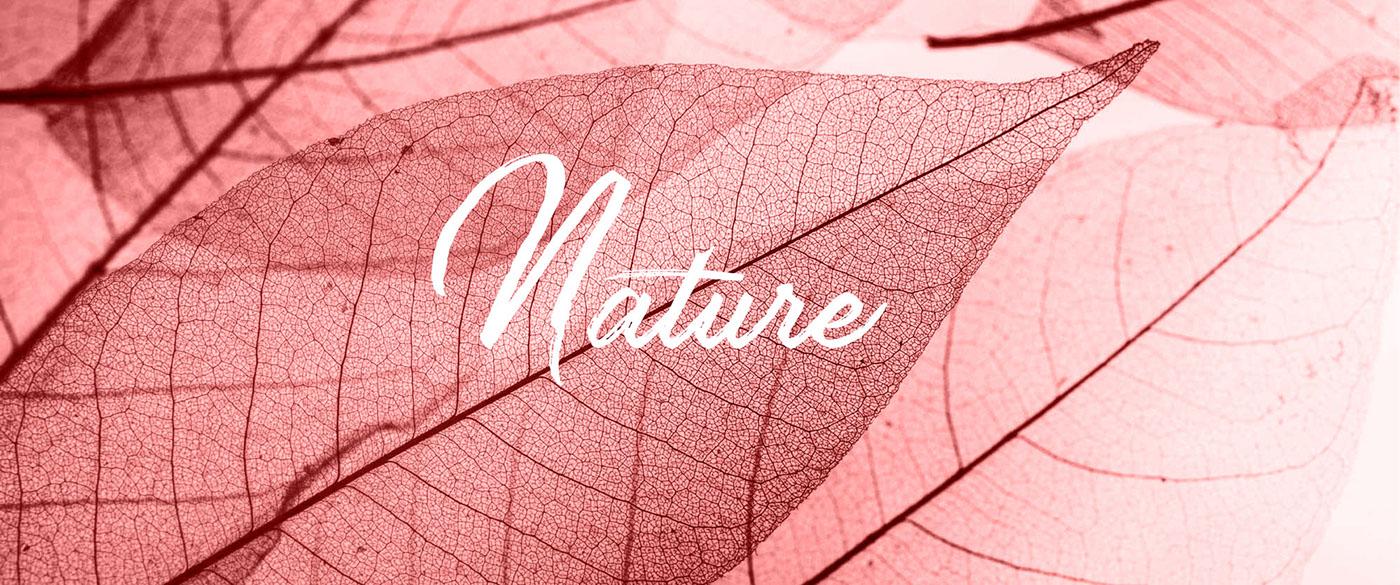 download font free premium strain typography   Calligraphy