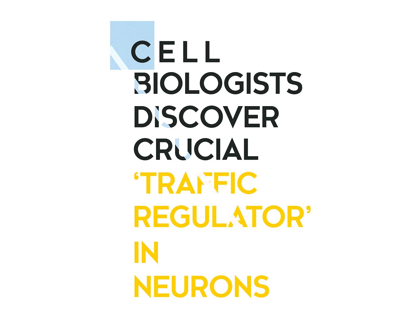 science neurons cytoskeleton Cell biologists regulator molecules brain nastplas Nerve