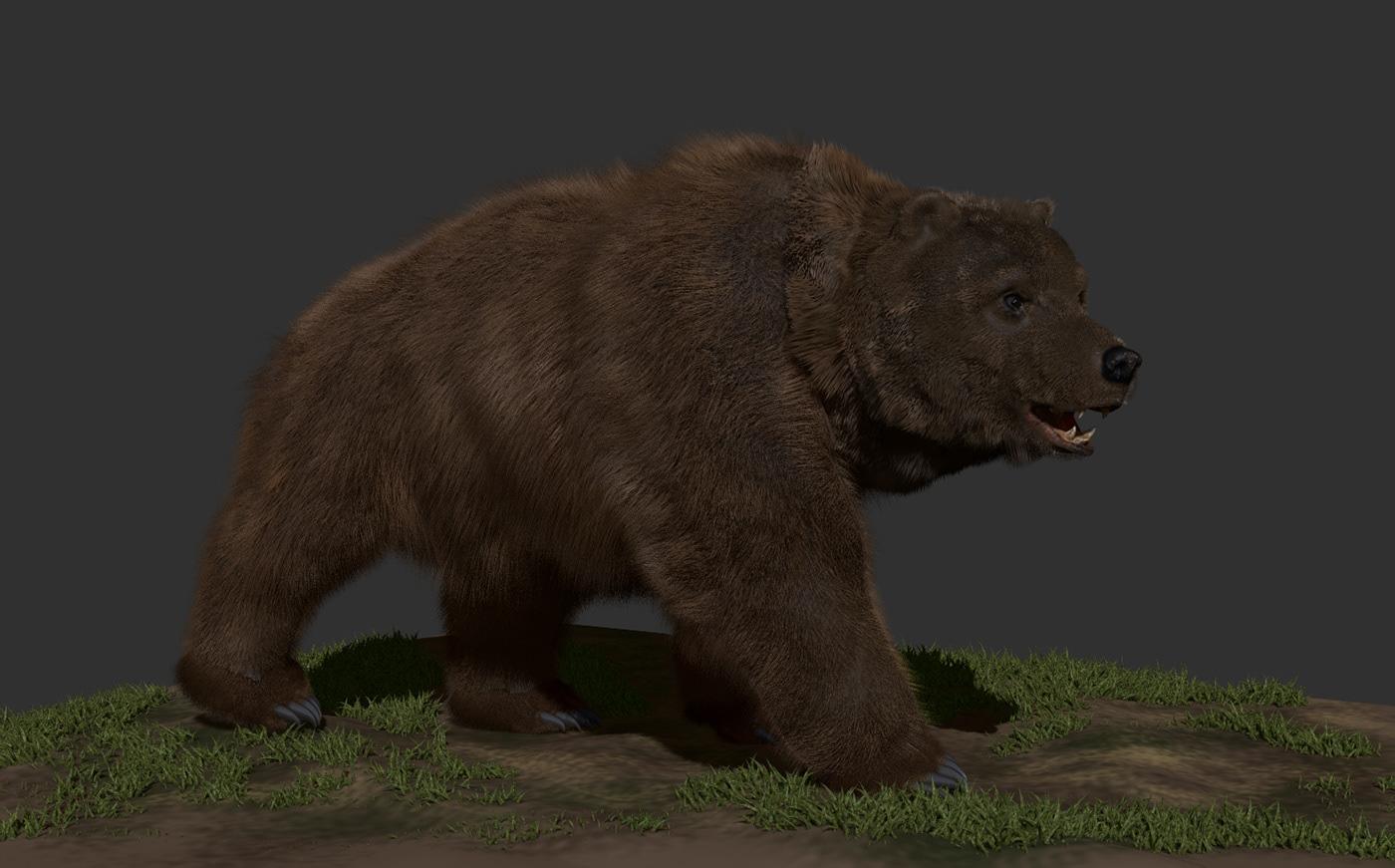 Image may contain: animal, mammal and brown bear
