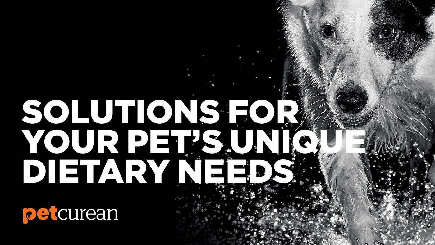 petcurean Pet Food  Packaging premium subplot Go! dog