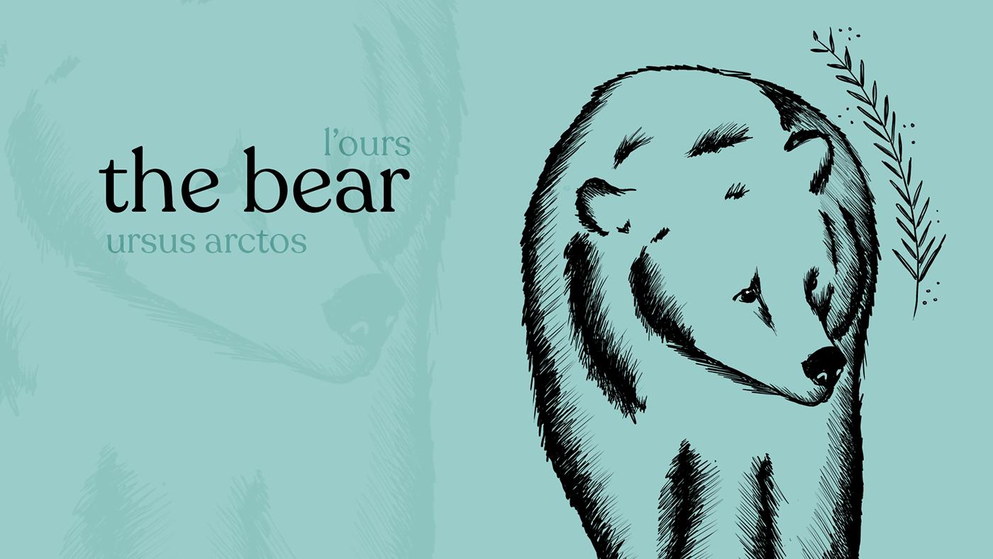 Bear illustration on blue background