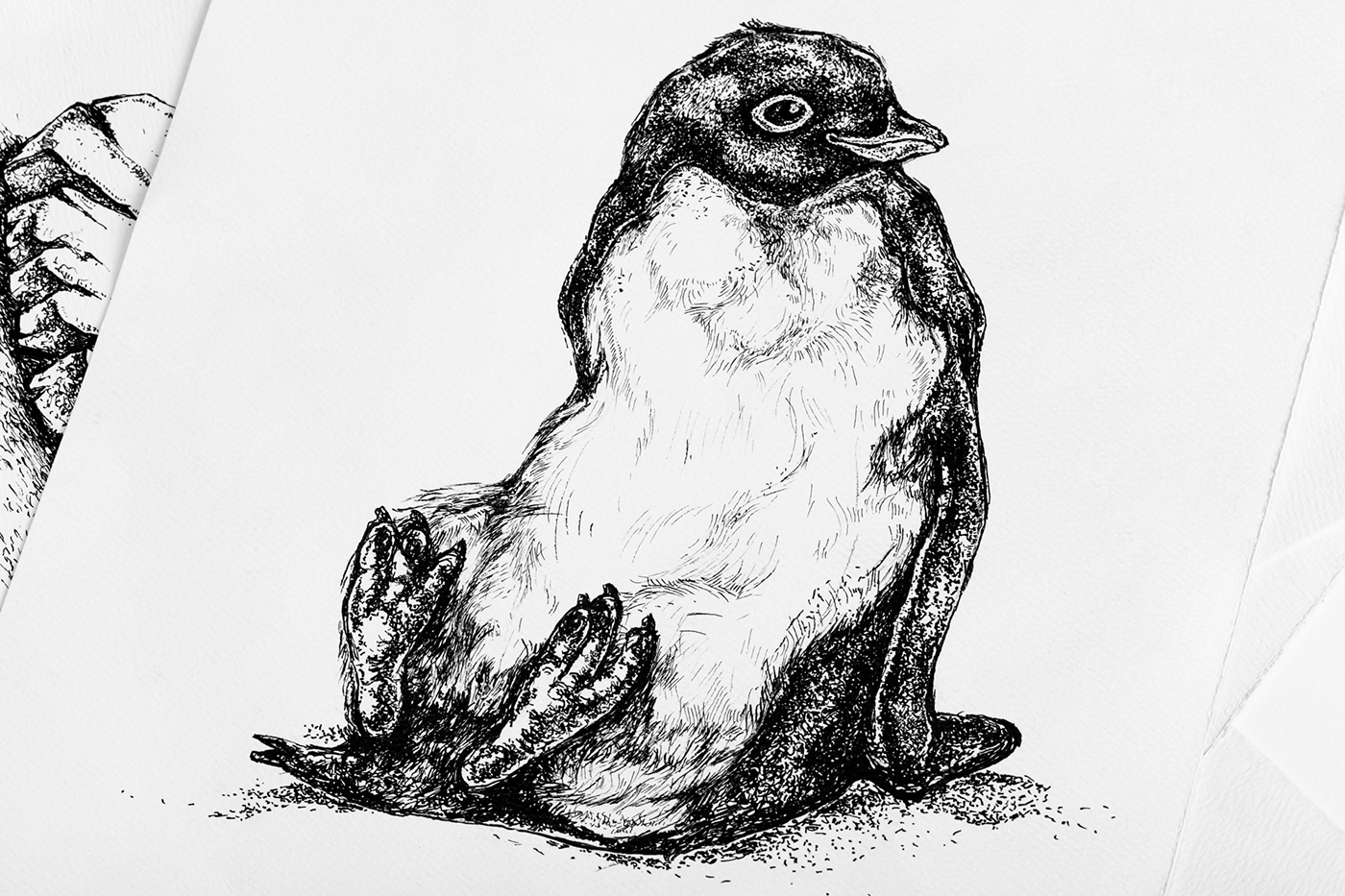 Line Drawing Penguin : Adelie & the stone on behance