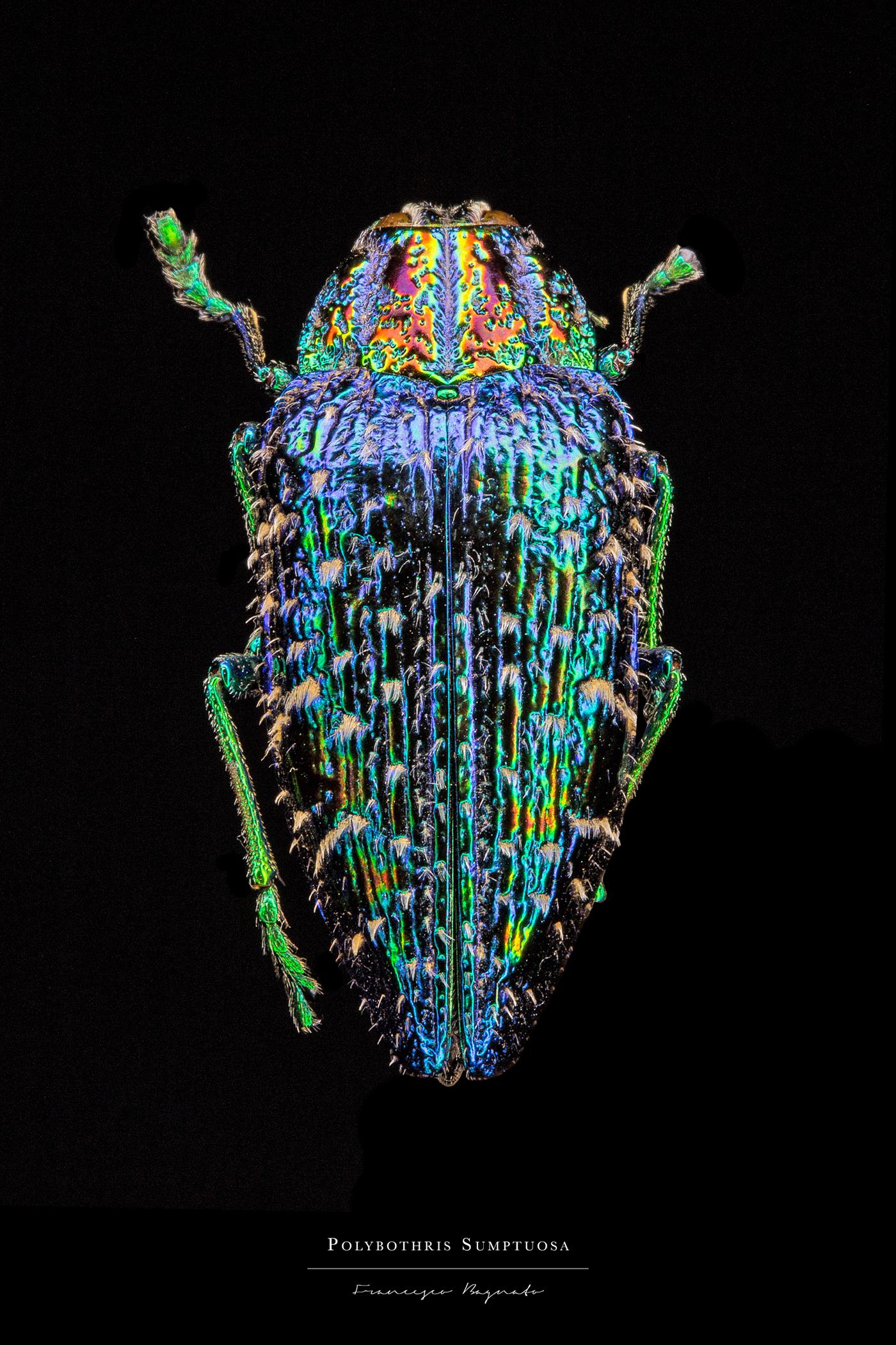 entomology,insect,macrophotography,Photography ,Nature,bagnato,wettaman