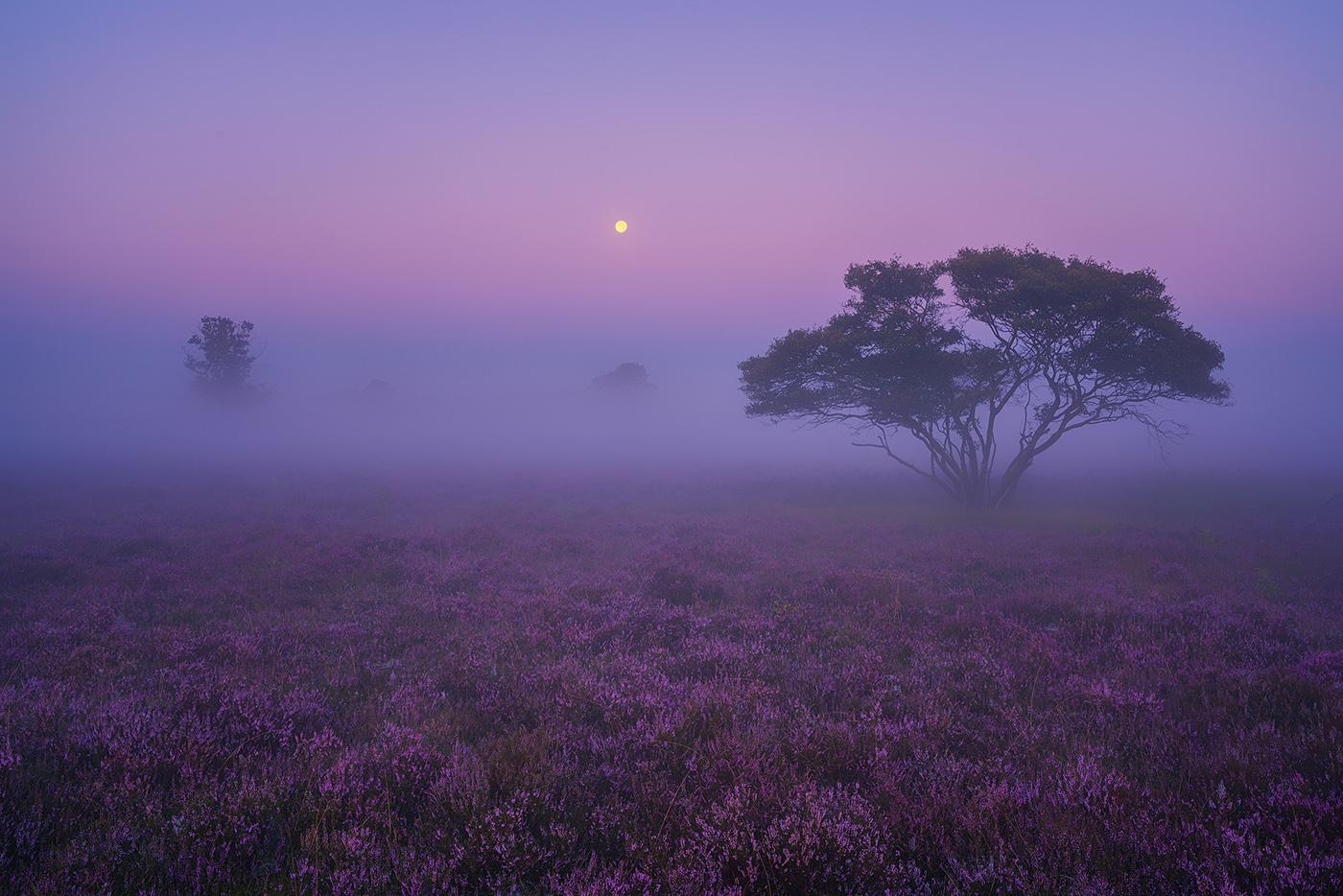 картинки фиолетовый пейзаж сарро боло карда