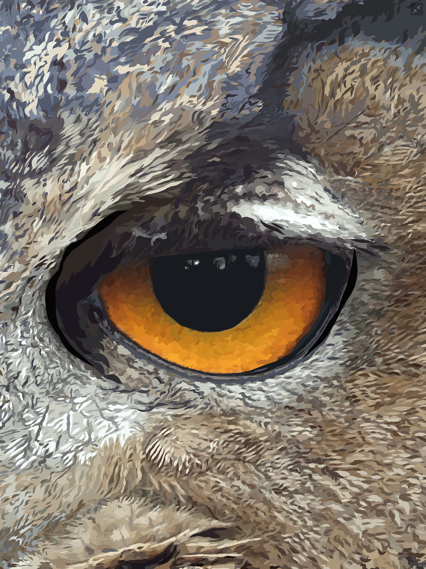 beak,bird,birds,britishwildlife,detail,DigitalIllustration,Drawing ,essexowl,eyes,feathers,Fur,hoot,ILLUSTRATION ,longearedowl,Nature,natureillustration,nighttime,owl,owls,ukwildlife,vector,vectorart,wildlife