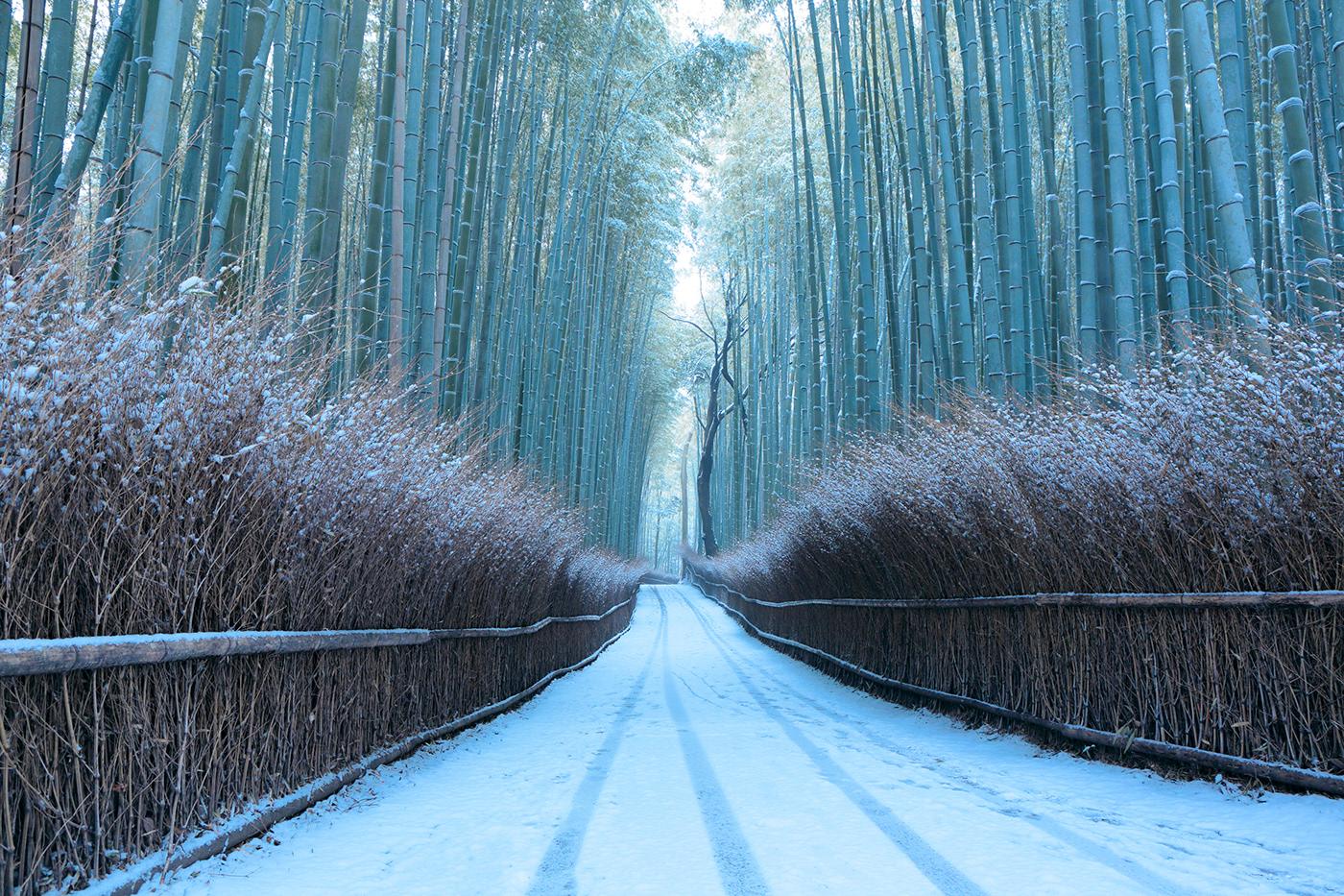 горки устраиваются японский лес зимой фото поэтому