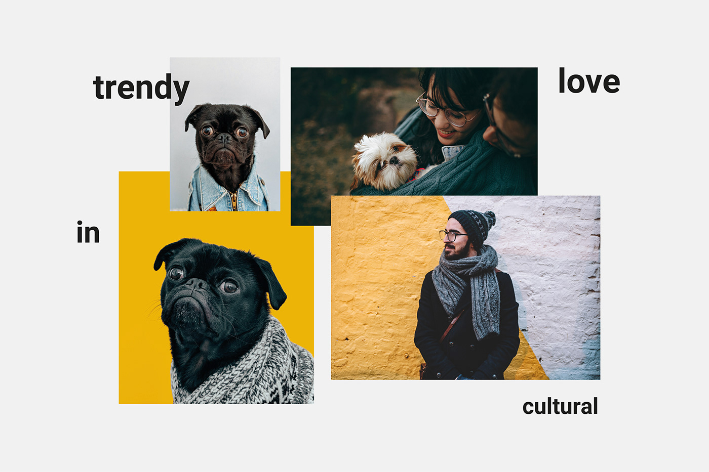 Image may contain: dog, carnivore and animal