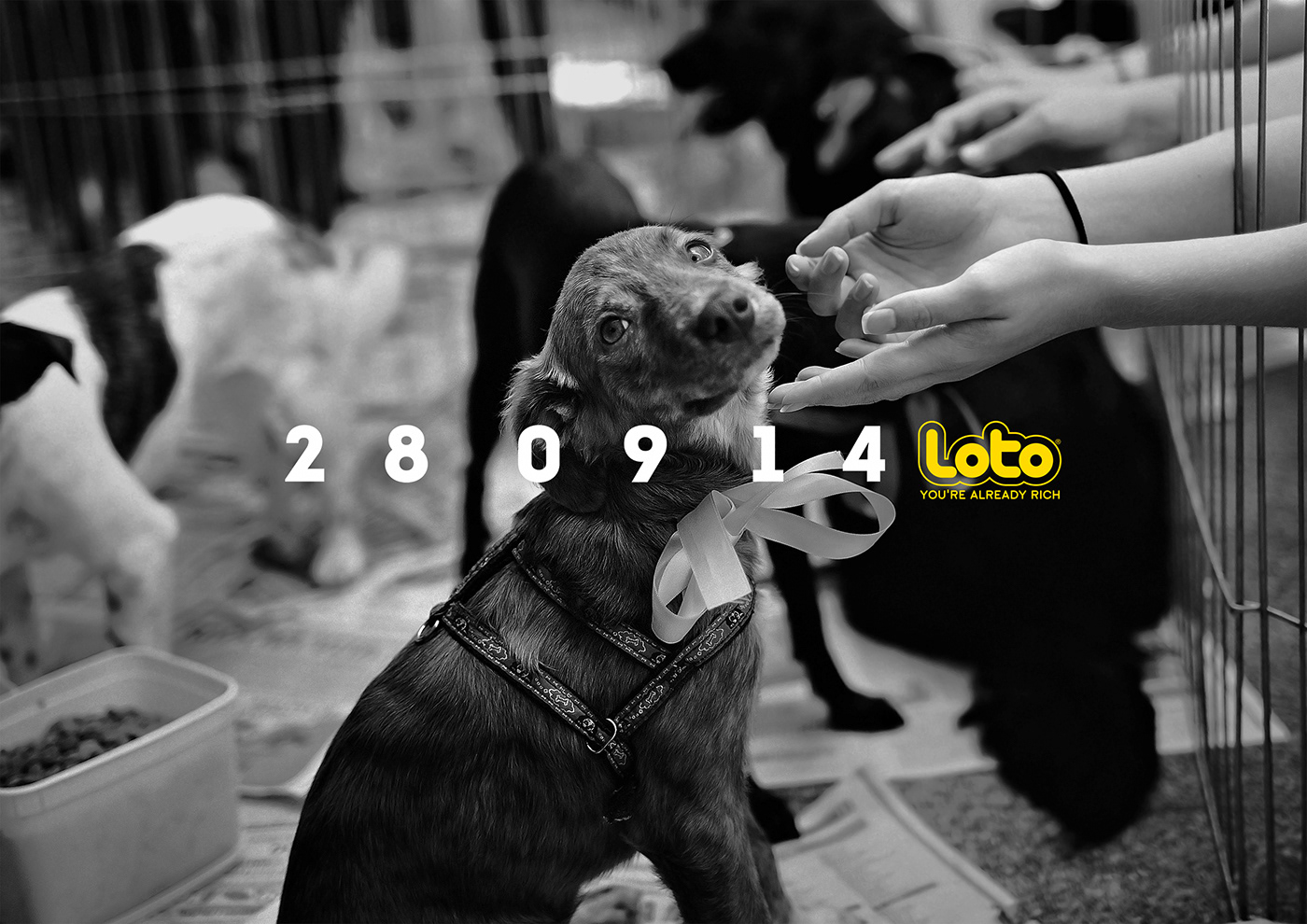 loto gambling chile Photography  loteria Lottery VML Lotto Cannes lions Yr