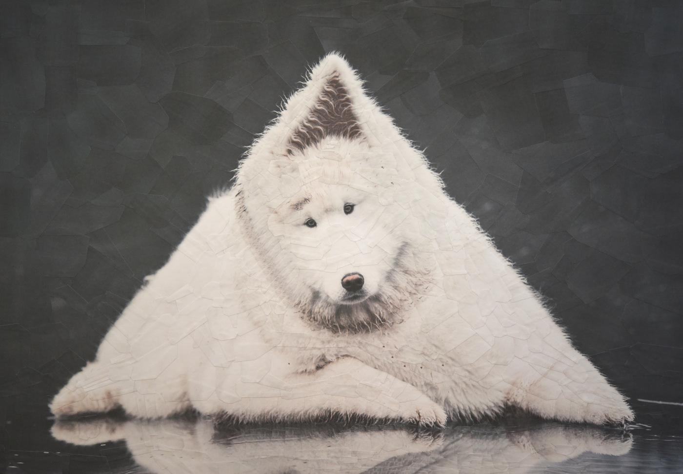 Image may contain: animal and dog