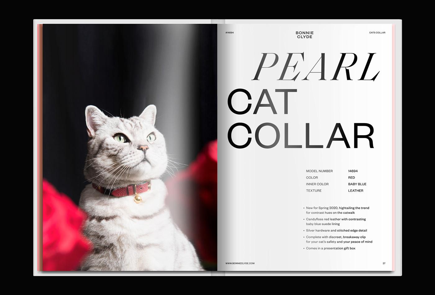 Image may contain: cat, carnivore and mammal