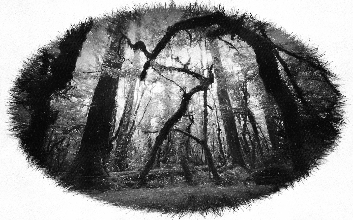 trees arbres forêt forest monochrome bnw W00DS NVENTFISCHER